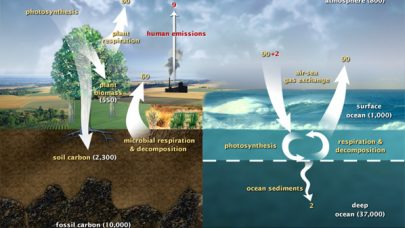 Components of the Global Carbon Cycle. U.S. Department of Energy Genomic Science program's Biological and Environmental Research Information System (BERIS)