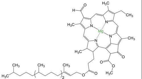 Klorofyll