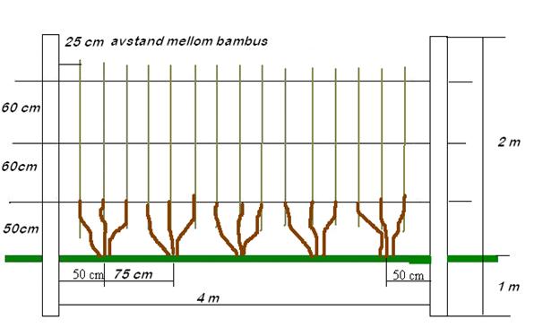 Rips Bilde 1 Utvikling i plantearet Bilde Stanislav Strbac
